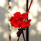 scarlet tears by csido644