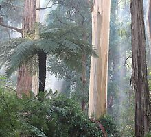 Misty Morning in the Bush by Bette Devine
