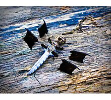Black Winged Dragon Fly Photographic Print