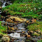Alpine Creek by Tori Snow