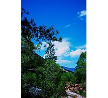 Taylor Creek Vista Photographic Print