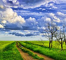 Dirt Road After the Rain by Myron Watamaniuk