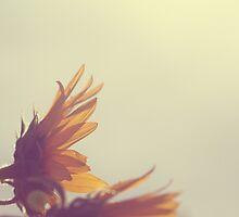Sunflowers In The Sun by ameliakayphotog