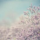 Romance In Purple by ameliakayphotog