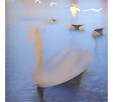 Ghost Swan Photographic Print