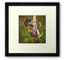 A Colorful Bunch Framed Print