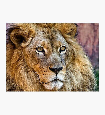 Majestic King Photographic Print