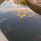 Reflections 2 by zamix