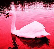 Pink Swan by KarinaLiberty