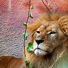 Lion by loiteke