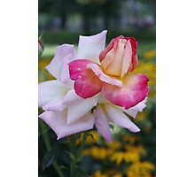 Two Roses Photographic Print