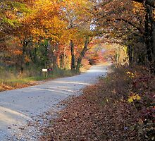 Country Fall Road by JohnDSmith