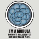 Morula by AviatorFilly