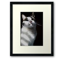 Playing with the light & shadows and a cat called Gary II Framed Print