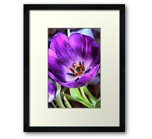 HDR attempt - Tulip Framed Print