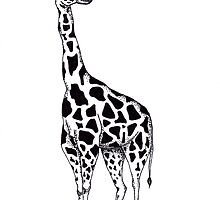 Line drawing Giraffe by hannaelizabeth
