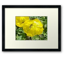 Popping right into Poppies Framed Print