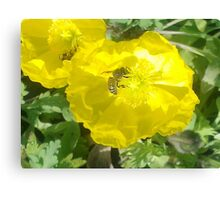Popping right into Poppies Canvas Print