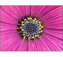 Flowers heart Photographic Print