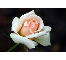 Peach of a Rose Photographic Print