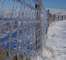 Icey Fence by ruffles