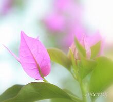 Pink leaves by aMOONy