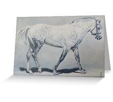 Black Shadow-Connemara Stallion Greeting Card