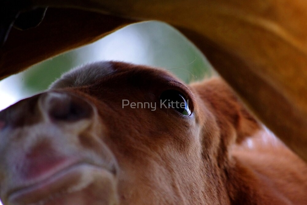 Milk bar by Penny Kittel