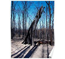 Mt Disappointment State Forest after the fires Poster