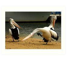 the itch. pelicans. san remo phillip island Art Print