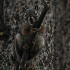 Squirrel Spy #1 by Ken McElroy