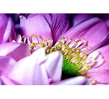 Wrapped In Pink Photographic Print