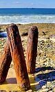 Catherine Hill Bay - Posts by Tam  Locke