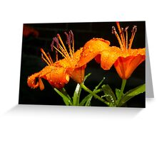 Orange Tigerlillies Greeting Card