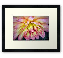 A Soft Touch! Framed Print