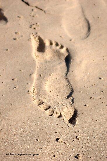 Pushmepullme on the sand © Vicki Ferrari by Vicki Ferrari