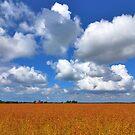 Golden flax under a Dutch sky.....  by Adri  Padmos