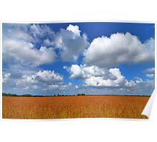 Golden flax under a Dutch sky.....  Poster