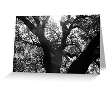silence your heart to hear the music of life Greeting Card