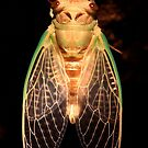 Cicada Two by Tim Wright
