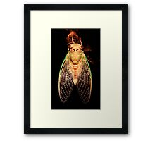 Cicada Two Framed Print