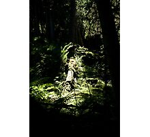 spotlighted Photographic Print