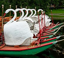 Swan Boats at Rest by hawkeye978
