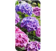 Hydrangeas at Trebah Gardens iPhone Case/Skin
