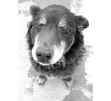 Snoopy? Photographic Print