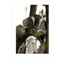 The green green grass of home Art Print