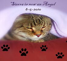 Sierra is now an Angel ©  by Dawn M. Becker
