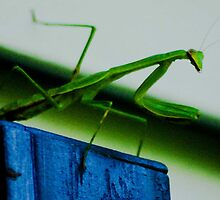 Mantis by Erica Sprouse