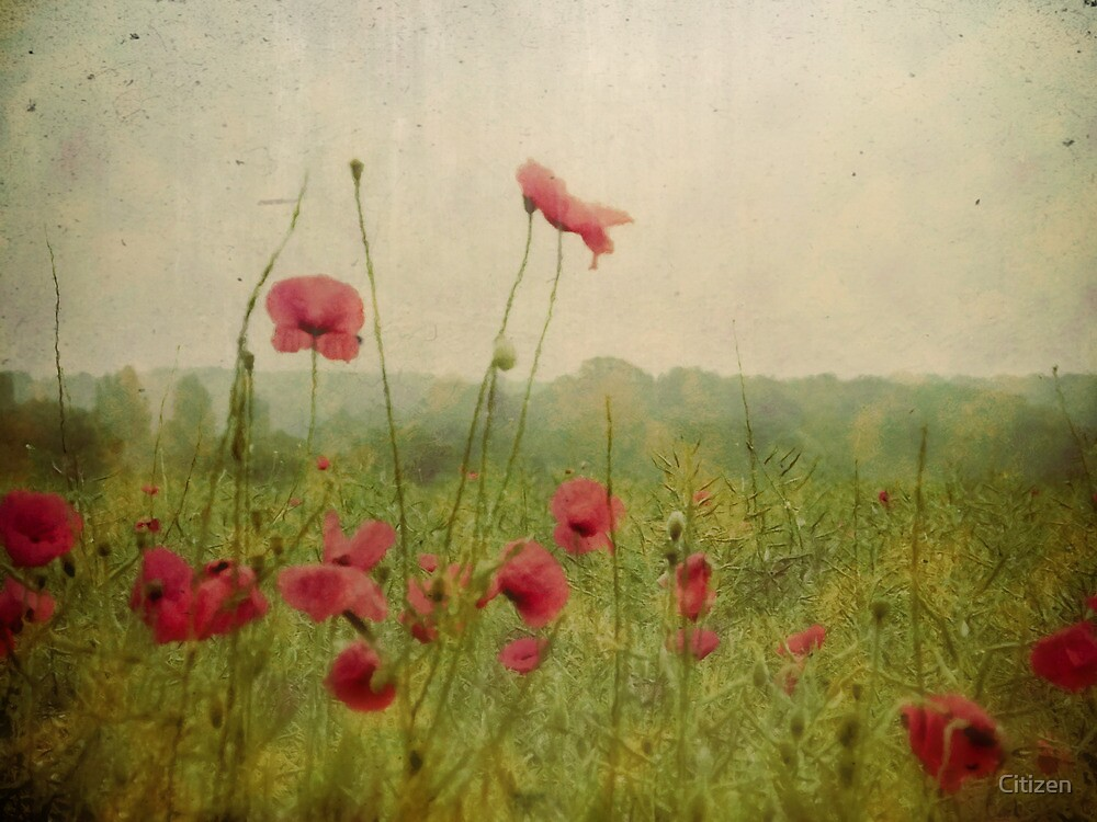 Poppies in the rain by Nikki Smith