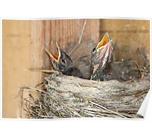Baby Robins 1 Poster